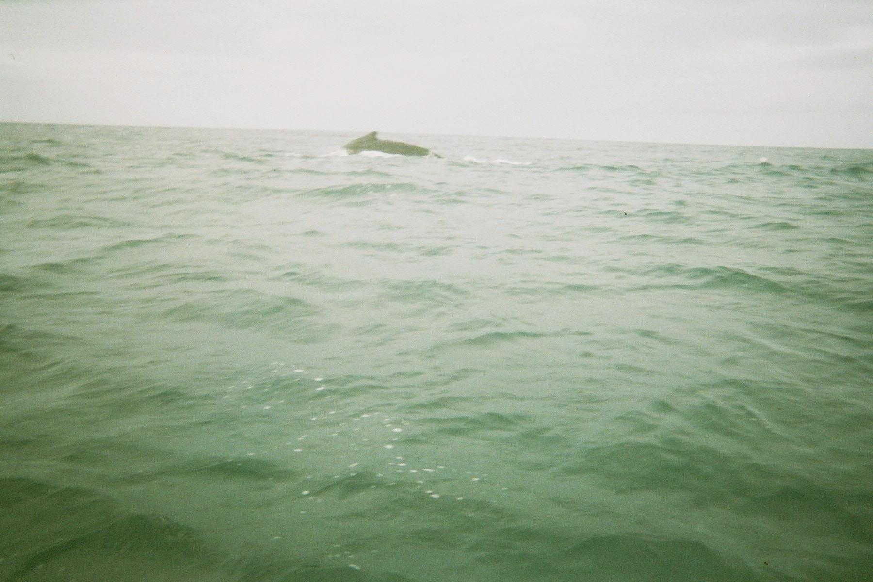 Baleine au large de Mayotte